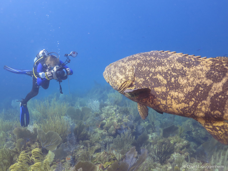 self proclaimed grouper capital of the world - HD 1024×768