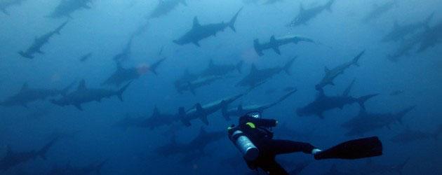 Shark Diving in Malpelo