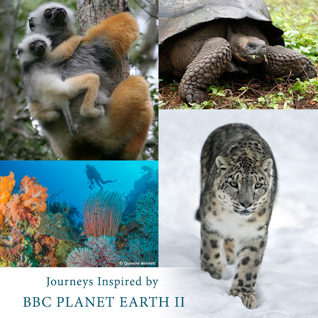 Journeys Inspired by BBC PLANET EARTH II