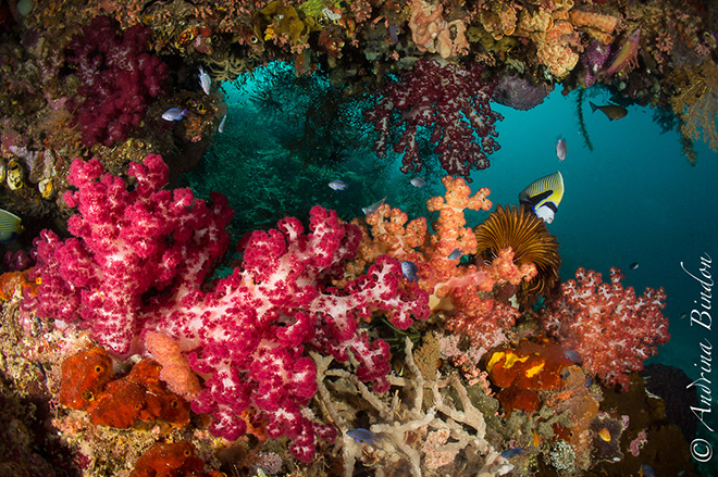 Underwater in Raja Ampat, Indonesia - Damai I Liveaboard