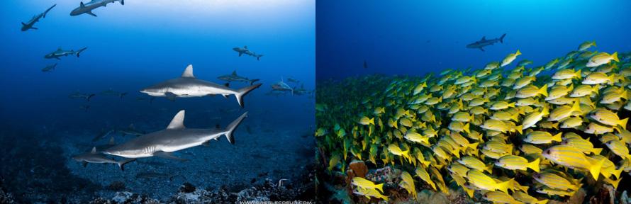 Tahiti 2019 Dive Group Trip - Dive Discovery