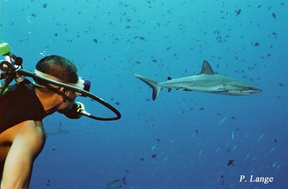 Shark Week 2019 in Palau