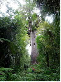 Day 10 - Visit the 'Lord of the Forest' Tane Mahuta
