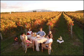 13 Day New Zealand Wine, Food & Art - New Zealand Tours - Dive Discovery New Zealand