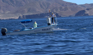 Blue Whales - Baja Mexico Whales: February 25 - March 3 2014 Trip Report