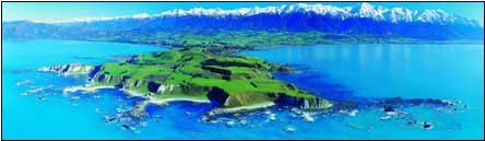 Best of New Zealand Top to Bottom - New Zealand Tour - Dive Discovery New Zealand
