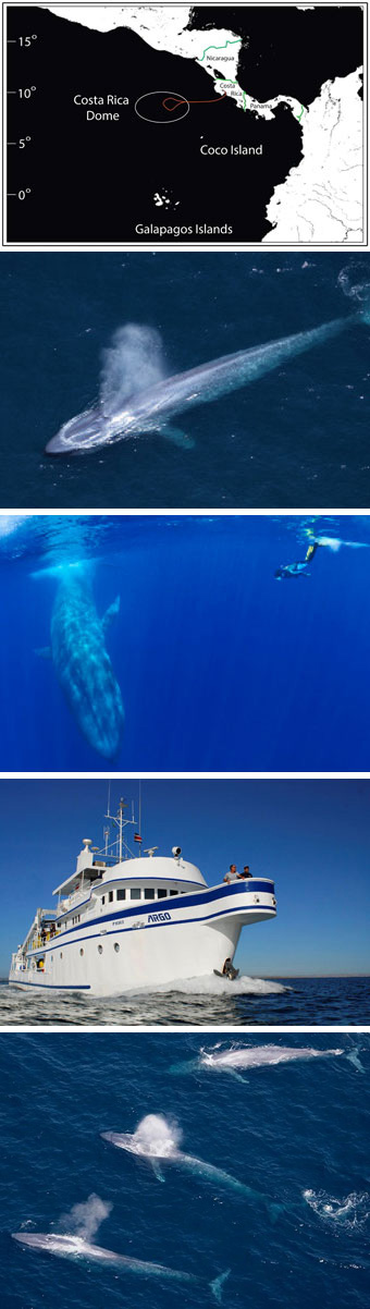 Blue Whales Costa Rica Dome Big Animals Expeditions