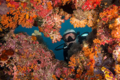 Damai 2 Liveaboard Diving - Sorong-Sorong (all Raja Ampat) October 26 - November 6, 2018 Group Trip