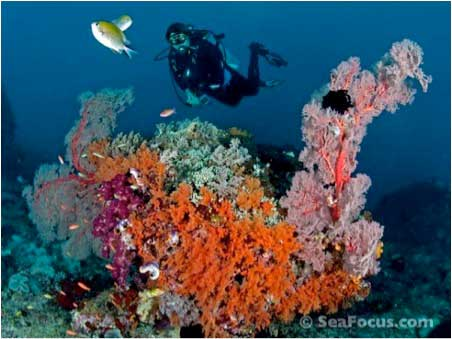 Dive Damai II, Indonesia Liveaboard Trip ~  KOMODO August 19-30 2013