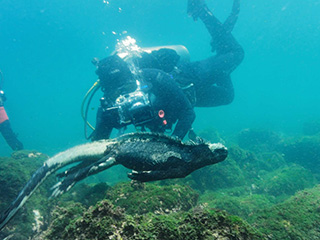 Dive with Marine iguana in Galapagos