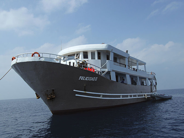 MY Felicidad II - Red Sea Liveaboards - Dive Discovery Red Sea