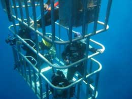 Great White Shark Cage Diving - Isla de Guadalupe
