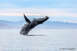 Whale Watching at Los Colibris Casitas