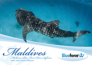 Maldives Blue Force Dive Tours