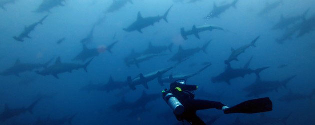 Malpelo Dive Expedition and Shark Diving - Dive Discovery Colombia