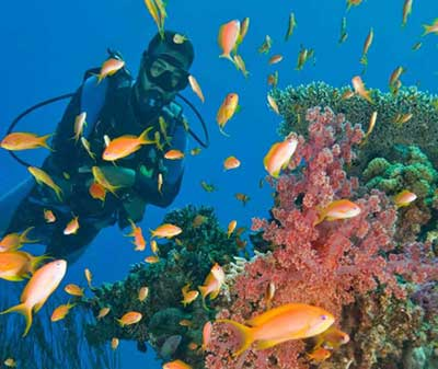Unique Diving & Land Safari (8-day) - Mediterranean and Red Sea Diving