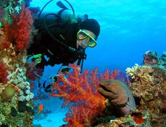 Mediterranean and Red Sea Diving