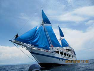 The KLM Pearl of Papua - Indonesia Liveaboards - Dive Discovery Indonesia