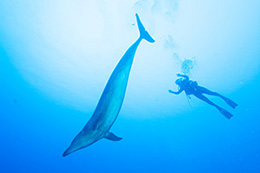 Cindi with a dolphin - diving in French Polynesia