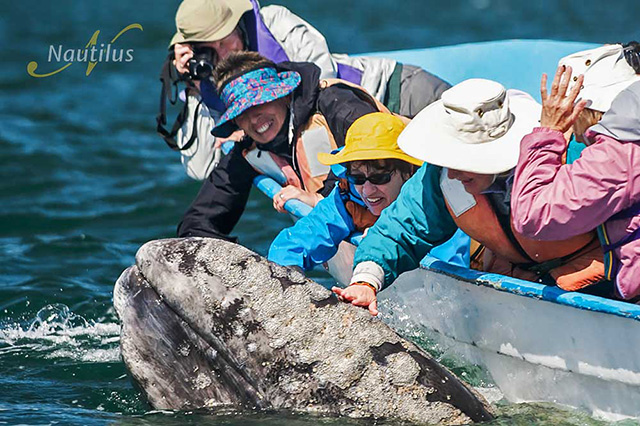 San Ignacio - Pacific Gray Whales - 3 Nights/4 Days