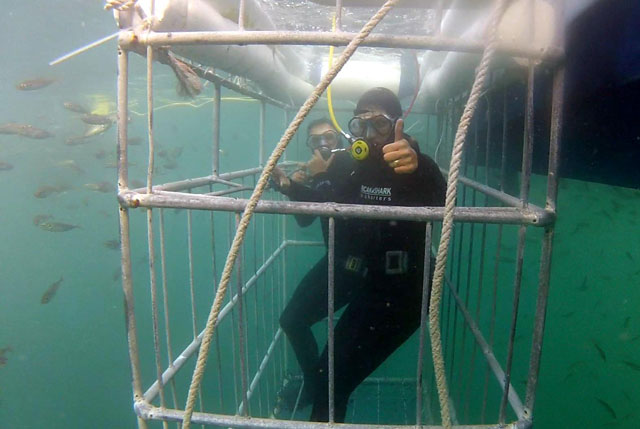 Shark Cage Tours Mexico