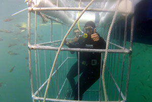 Great White Shark Cage Diving in Seal Island - False Bay
