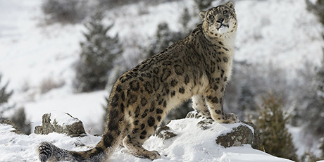 Snow Leopard Expedition in Ladakh, 15-27 March 2019 Group Trip