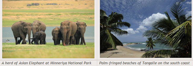 Sri Lanka travel destinations - A herd of Asian Elephant at Minneriya National Park - Palm-fringed beaches of Tangalle on the south coast