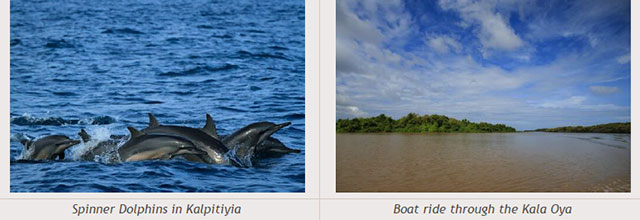 Sri Lanka travel destinations - Spinner Dolphins in Kalpitiyia - Boat ride through the Kala Oya