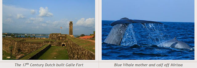 Sri Lanka travel destinations - The 17th Century Dutch built Galle Fort - Blue Whale mother and calf off Mirissa