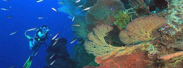 Uepi Island Resort Cost