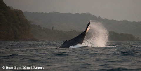 Whale watching in São Tomé and Príncipe