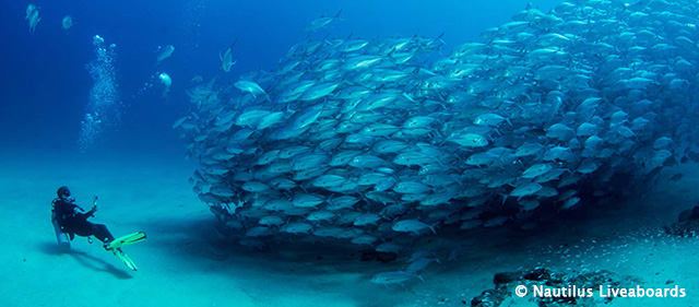 Cabo Pulmo Sample Itinerary - Sea of Cortes, Mexico - Dive Discovery
