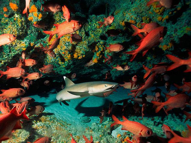 Diving Package Tahiti Tikehau Rangiroa 9 Days 8