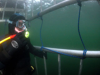 Great White Shark Cage Diving, Farallon Islands