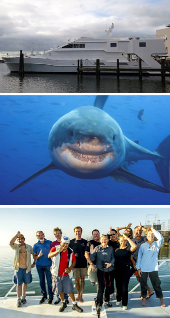 Great White Shark, Isla Guadalupe - Big Animals Expeditions with Amos Nachoum  - Dive Discovery