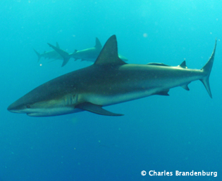 Cuba Trip Report: Diving Gardens of the Queen with Ocean Doctor - January 2014