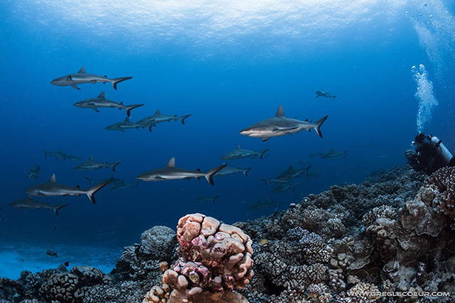 Scuba Dive with sharks in Tahiti ~ Swim with Whales, September 13 - 29 2019 Group Trip